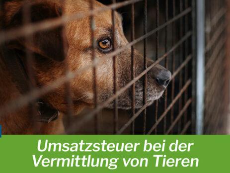 Umsatzsteuer bei der Vermittlung von Tieren