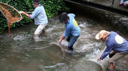 Fischertag ist ein traditionelles Fest der Stadt Memmingen